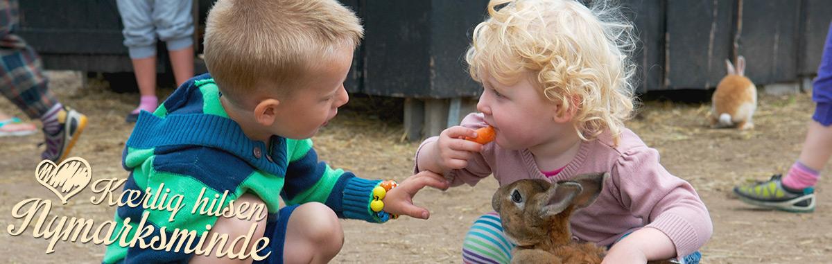 kanin på Nymarksminde